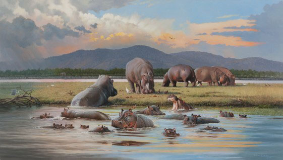 Hippos in the Luangwa River