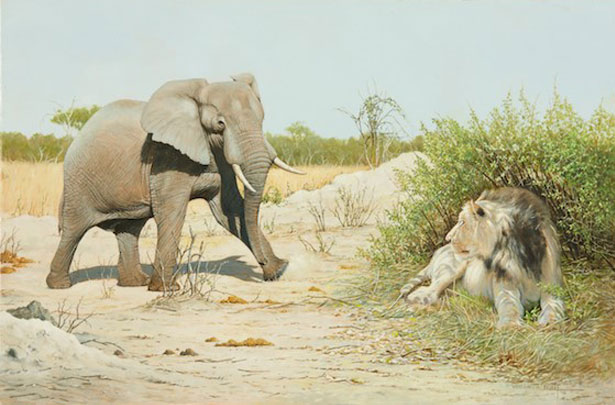 Tension - A female elephant confronts a lion