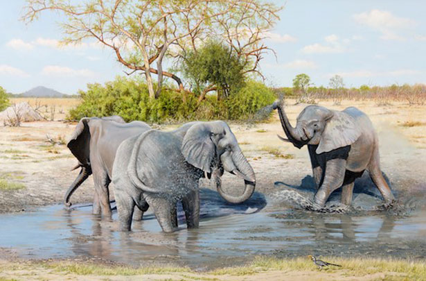 Young Bull Elephants in a Savute Waterhole, Botswana
